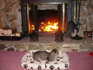 猫 暖炉③